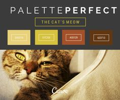 Palette perfect colors of the week! We think these are the cat's meow.  Codes for your designs: EAD27A, D7C33E, A55129, 623713