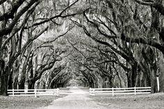 WORMSLOE HISTORIC SITE, GEORGIA  | Wormsloe Historic Site ~ Savannah, GA