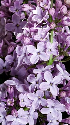 Fleurs live wallpaper - Fond d& lilas incroyable pour votre iPhone XS de Everpix Live d& - Live Wallpaper Iphone, Locked Wallpaper, Lock Screen Wallpaper, Mobile Wallpaper, Wallpaper Backgrounds, Hd Flower Wallpaper, Wallpapers Android, Live Wallpapers, Desktop Wallpapers