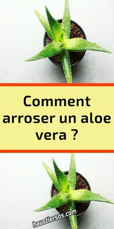 Aloe Vera Plant Indoor, Indoor Plants, Multiplier Des Plantes Grasses, Aloa Vera, Comment Planter, Aloe Vera Gel, Horticulture, Cactus, House Plants
