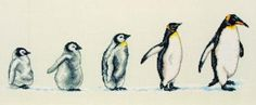 These penguins in a row are so cute!