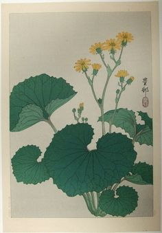 Plant with yellow flowers(石蕗?)
