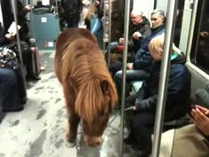 Just a pony travelling on the S-Bahn in Berlin