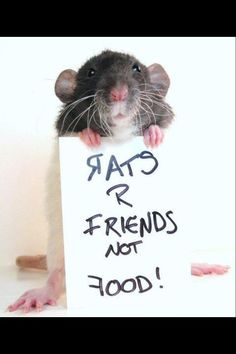 Kat RattyMum Stradling's Photos - I know right! I guess snakes have to eat, but my pet rat was SO sweet!
