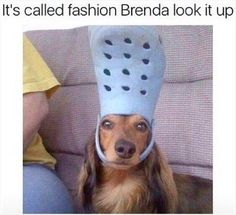Funny, Memes, Pictures: funny-animal-pictures-1-2