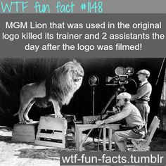 MGM lion killed its trainer  MORE OF WTF-FUN-FACTS are coming HERE  animales, and weird factsONLY