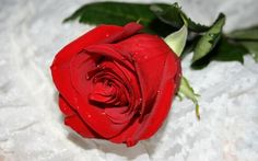 Most Romantic Flowers Photography Of Valentine's Day | Funees.com