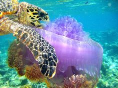 Society of Biology Photography Award 2014 shortlist features a sea turtle eating a jellyfish, a spider at sunset and a chick embryo - News - Art - The Independent