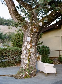 display family pictures and wedding portraits on a tree