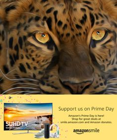 Amazon's Prime Day is here!When you #StartWithaSmile on #PrimeDay, Amazon donates to Big Cat Rescue. Shop for great deals at smile.amazon.com/ch/59-3330495 Prime Day is one of the biggest shopping days of the year.