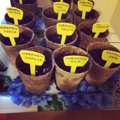 Habanero Nursery 2014 Chilli Plant, Nursery, Orange, Breakfast, Hot, Morning Coffee, Day Care, Baby Rooms, Baby Room