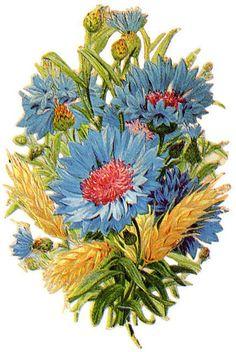 http://vintageimages.org/var/resizes/Flowers/Flowers353.jpg?m=1314016909