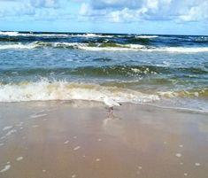 Waves, Beach, Outdoor, Outdoors, The Beach, Beaches, Ocean Waves, Outdoor Games, The Great Outdoors