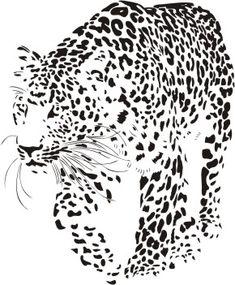 Dzikie koty 17 - leopard