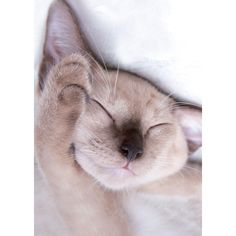 Cats Protection Mini Notecard Pack - Sleeping Kitten