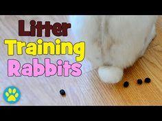 ▶ Rabbit Litter Training Tips & Advice! - YouTube