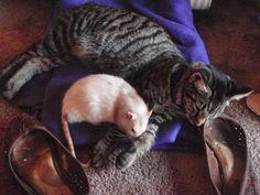 Cat and Rat, a love story, Pt. 2