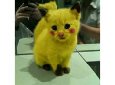 Pikachu kitty. Let's take a moment of how cute this is
