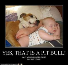 Yes, Pitt Bull! sweet love any breed can be good or bad