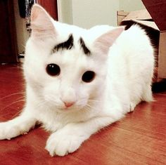 9.) Sam, the Cat with Eyebrows