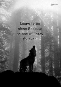Wolf Gurus is the number 1 eCommerce site about wolf. until today we sell about Item About wolf, native america, viking, dream catcher. Badass Quotes, Wisdom Quotes, True Quotes, Words Quotes, Motivational Quotes, Inspirational Quotes, Sayings, Lone Wolf Quotes, Warrior Quotes