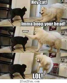 Cat and dog | Funny Animal Pictures