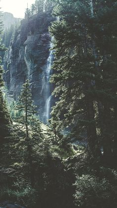Bringing The Forest To You With 9 Free iPhone X Wallpapers | Preppy Wallpapers