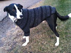 Free Raverly Dog & Cat Sweater