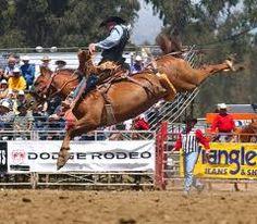 FAVORITE BRONC PIC EVER!!!!   Rod Hay at Salinas