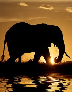 Sundown silhouette (cropped for Pinterest) http://www.beautiful-animals.com/25-most-beautiful-animals-photography-on-stumbleupon/