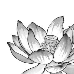 Lotus Flower Art Print  Matted 8x10 by HeatherVitticore on Etsy, $15.00