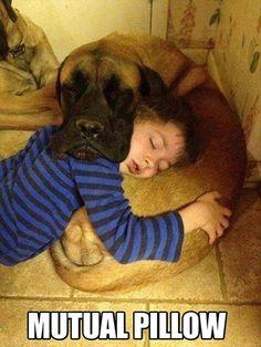 Pillow symbiosis.
