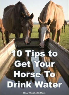 Get Your Horse To Drink More With These 10 Tips  Happy Horse Healthy Planet is dedicated to educating and assisting horse owners in learning methods for earth-friendly horse care.  We do this through speaking at educational seminars and club meetings, through my books and through horse/farm consultations.