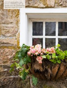 window box filled with begonias Under The Tuscan Sun, Garden Windows, Rose Cottage, Window Boxes, Vintage Country, Farmhouse Chic, Flower Boxes, Geraniums, Pretty Flowers