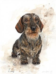 Dachshund Drawing, Arte Dachshund, Wire Haired Dachshund, Big Dogs, Dogs And Puppies, Colored Pencil Portrait, Wolf Painting, Vintage Dog, Realistic Drawings