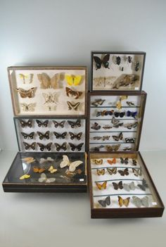 FABULOUS COLLECTION.   ADORE FRAMED BUTTERFLY PICTURES.