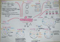 #mitose #biologia #resumo