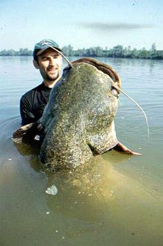 FISHING AFIELD: Big Catfish -- Catch-em if you can