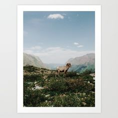 Collect your choice of gallery quality Giclée, or fine art prints custom trimmed by hand in a variety of sizes with a white border for framing. https://society6.com/product/bighorn-overlook_print?curator=nurrahaq