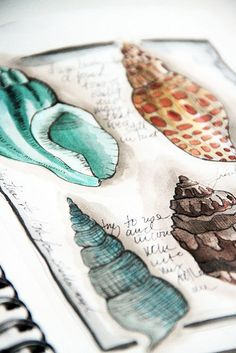 Alisa Burke Art Sketchbook with observational drawings of shells - developing ideas from natural Art Watercolor, Watercolor Journal, Watercolor Fashion, Art And Illustration, Alisa Burke, Observational Drawing, Guache, Sketchbook Inspiration, Sketchbook Ideas