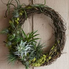 zita elze home and garden wreath - Tshenko ya Google