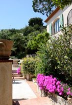 View of the garden at Villa Panorama French Riviera, Villa, Vacation, Garden, Plants, Vacations, Garten, Lawn And Garden, Gardens