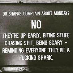 Be a shark. #quotes #quote #assistant2boss #life...