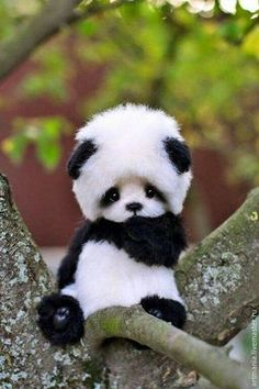 The cutest baby panda out there.or a teddy bear wearing a panda hat. I j-just want to raise it as my own. Give it all the bamboo. Cute Panda Baby, Baby Animals Super Cute, Baby Panda Bears, Cute Baby Bunnies, Cute Little Animals, Panda Babies, Baby Pandas, Animal Babies, Cute Animals Images