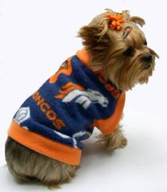"And I will name my teacup yorkie, ""Timmy"" (don't worry, I won't make him wear the bow)"
