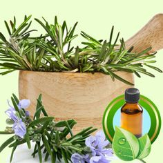 Rosemary Tunisian ESSENTIAL OIL  #oil #oils #natural #smellingnature