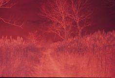 Rosso magenta