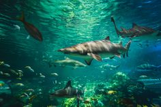 This week is Shark Week on Discovery Channel. Test your knowledge with these 13 shark-related trivia questions Shortfin Mako Shark, Fun Trivia Facts, Trivia Questions, Ocean Crafts, Show Me The Way, Shark Week, Vertebrates, Predator, Funny Images