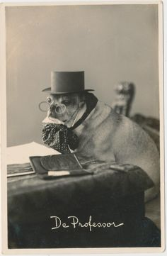 This dog pretending to be a professor, 1934 | 30 Cute Dog Photos From The '30s