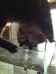 Favorite water bowl